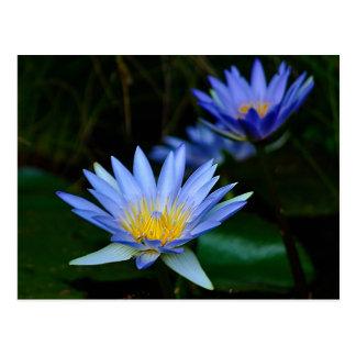 Flor y significado de Lotus Tarjetas Postales