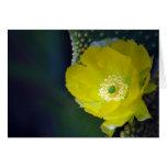Flor y significado del cactus tarjeta de felicitación