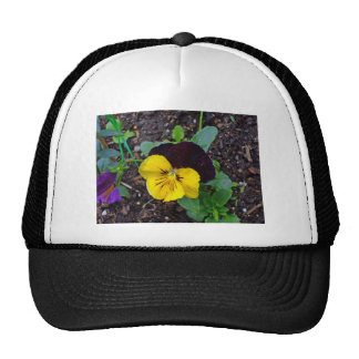 Flora de pensamientos amarillos y púrpuras gorro