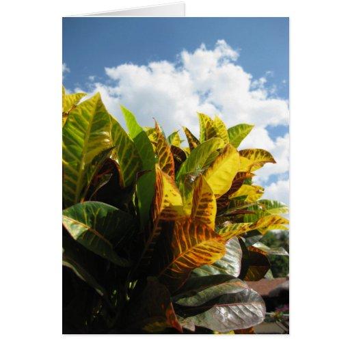 Flora de Rican de la costa Tarjeta Pequeña
