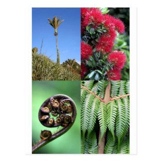 Flora del natural de Kiwiana Nueva Zelanda Tarjetas Postales