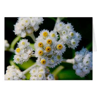 Flora en Manan magnífico, NOTA Tarjeta De Felicitación