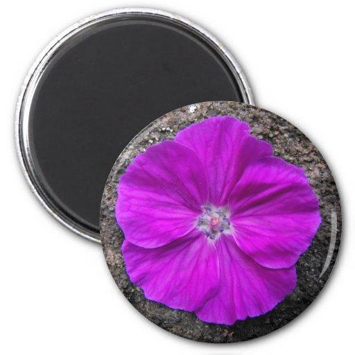 Flora en piedra iman de frigorífico