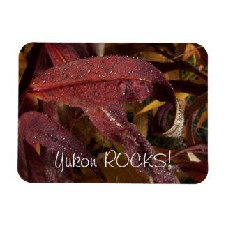 Flora enredada; Recuerdo del territorio del Yukón Rectangle Magnet