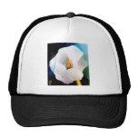 Flora & Fauna Hat