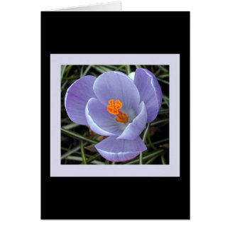 flora for spring #2 card