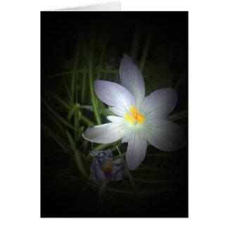 flora for spring #4 card