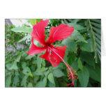 Flora hermosa de Rican de la costa Tarjeta Pequeña