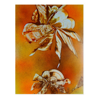 Flora Insecta Postcard