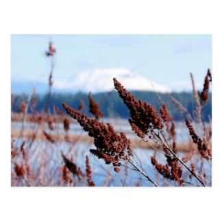 Flora pelirroja en la postal del Monte Saint Helen