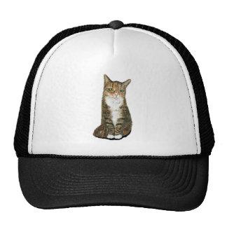 Flora the cat trucker hat