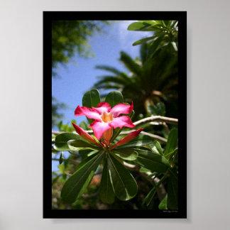 Flora tropical póster