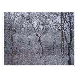 Flora y árboles nevados en Upstate Nueva York Postales