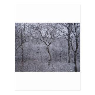 Flora y árboles nevados en Upstate Nueva York Tarjeta Postal