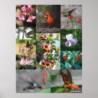 Flora y fauna del LA Póster