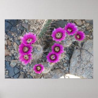 Floración 1 del cactus poster