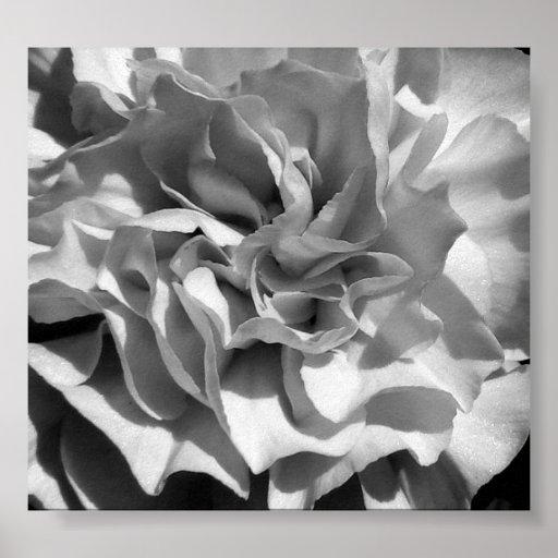 Floración #4 póster