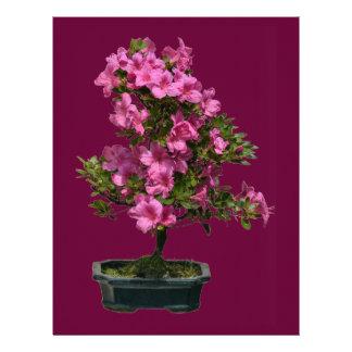 Floración aislada del rododendro de los bonsais membrete