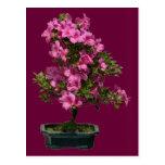 Floración aislada del rododendro de los bonsais postal