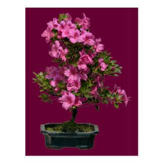 Floración aislada del rododendro de los bonsais postales