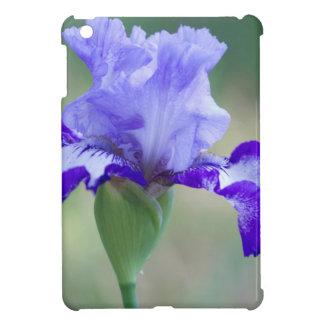 Floración alta púrpura y azul del iris barbudo