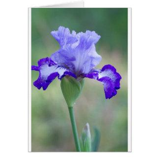 Floración alta púrpura y azul del iris barbudo tarjeta de felicitación