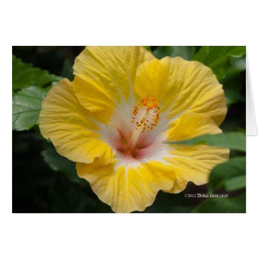 Floración amarilla del hibisco felicitaciones