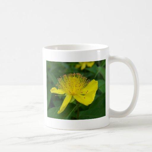 floración amarilla taza clásica
