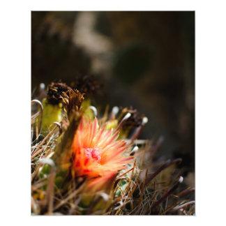 Floración anaranjada del cactus fotografía