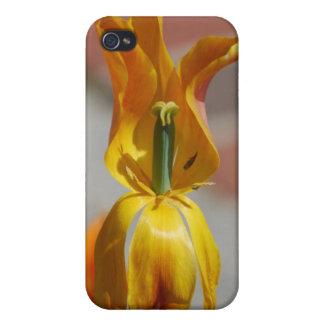 floración anaranjada del lirio iPhone 4 cárcasas