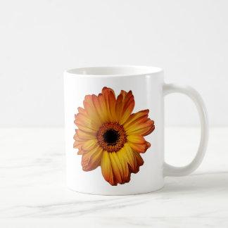 Floración anaranjada soleada de la flor del taza clásica