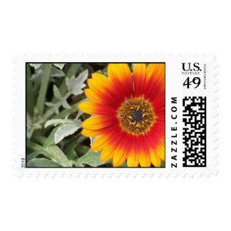 Floración asimétrica sello