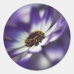 Floración azul etiqueta redonda