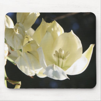 Floración blanca del cactus de la yuca tapete de ratón