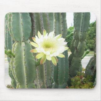 Floración blanca en el cactus alfombrilla de ratones