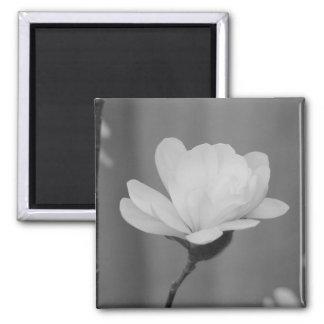 Floración blanco y negro del Centennial de la magn Imán De Frigorífico