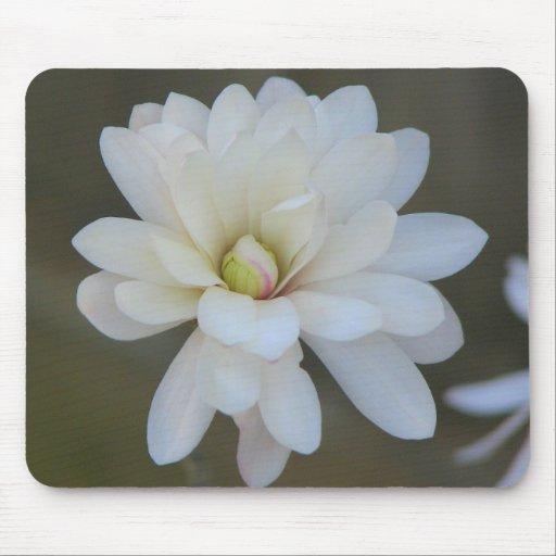 Floración bonita del Centennial de la magnolia Alfombrilla De Ratones
