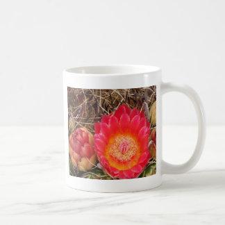 Floración brillante del cactus de barril taza básica blanca
