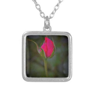 Floración color de rosa collar plateado