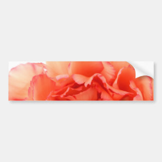 Floración coralina de la flor del clavel pegatina de parachoque