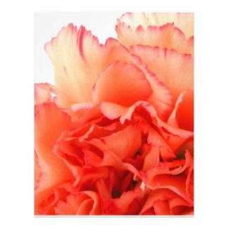 Floración coralina de la flor del clavel tarjeton