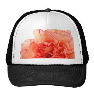 Floración coralina de la flor del clavel gorro
