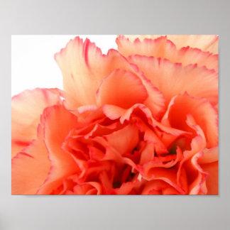 Floración coralina de la flor del clavel impresiones