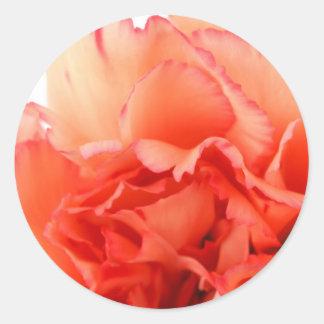 Floración coralina de la flor del clavel etiqueta redonda