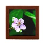 Floración de Blackberry Caja De Recuerdo