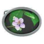 Floración de Blackberry Hebillas Cinturón Ovales