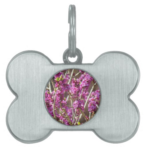 Floración de Daphne Placas De Nombre De Mascota