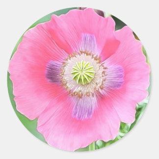 Floración de la amapola - Papaver - somniferum Pegatina Redonda