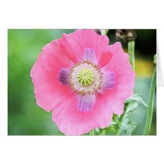 Floración de la amapola - Papaver - somniferum Tarjeta De Felicitación