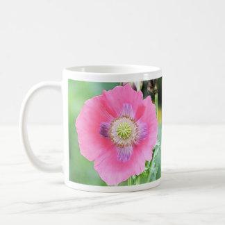 Floración de la amapola - Papaver - somniferum Taza